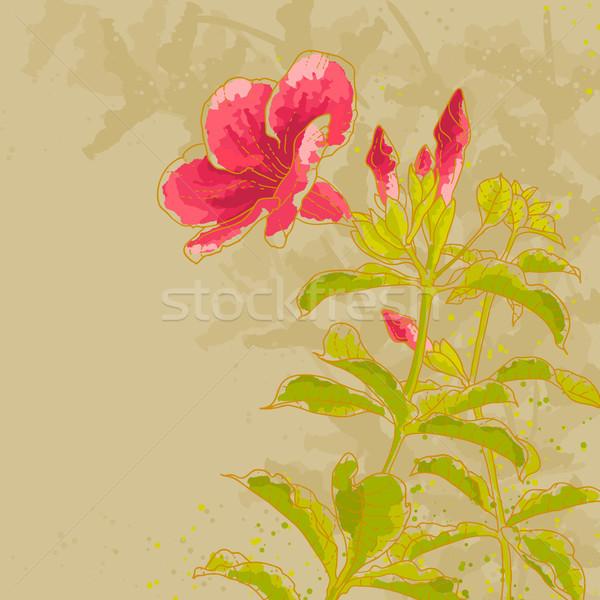 Virág körvonal rajz levelek bézs vízfesték Stock fotó © jet