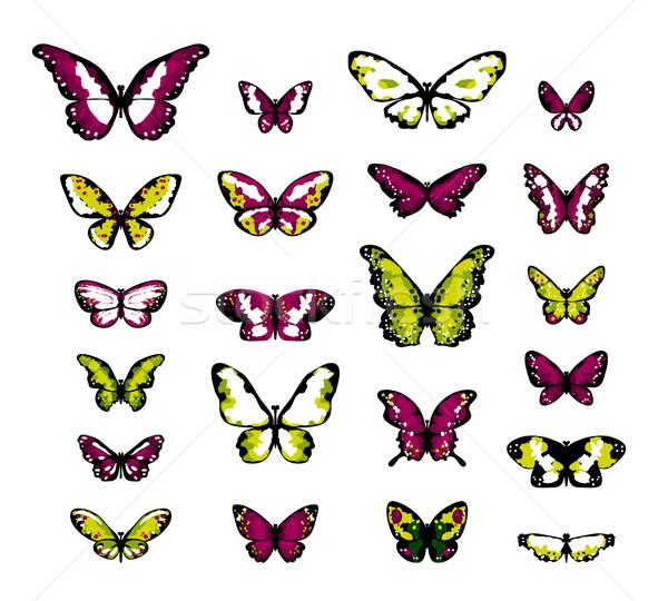 Rendkívül részletes fantázia pillangók gesztenyebarna olajbogyó Stock fotó © jet