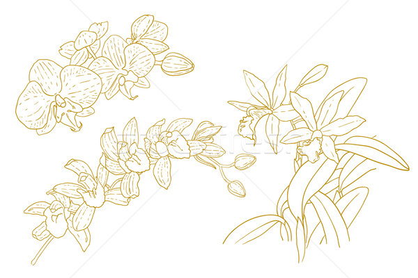 Set of one-colored outlined orchids Stock photo © jet