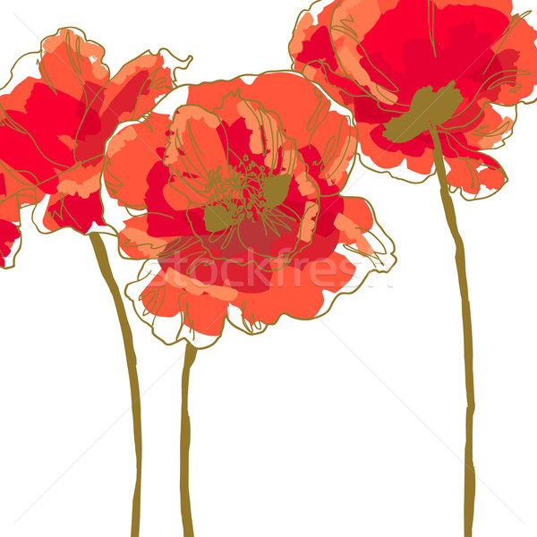 Three flower of poppy Stock photo © jet
