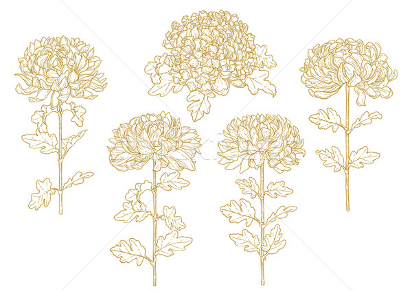 Set of one-colored outlined chrysanthemum Stock photo © jet