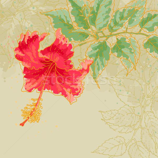 Hibiszkusz virág körvonal rajz levelek bézs Stock fotó © jet