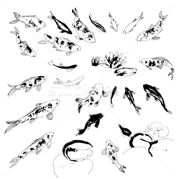 Koi vis ingesteld zwart wit collectie hand Stockfoto © jet