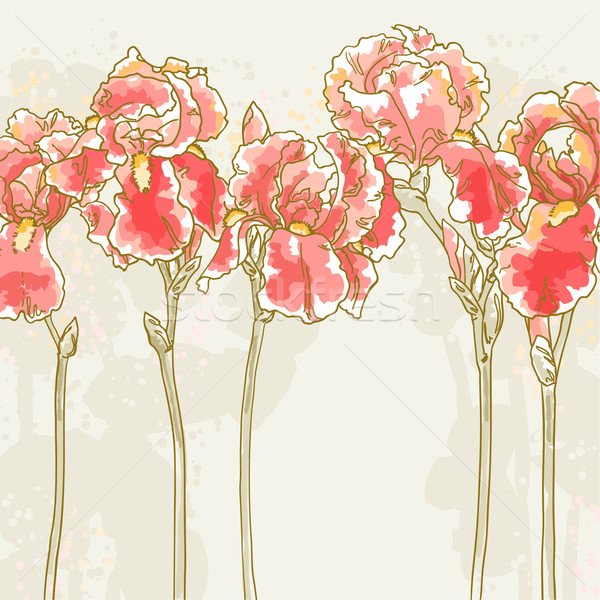 Background with red iris flowers Stock photo © jet