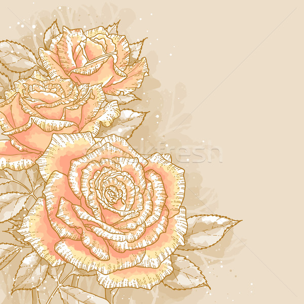 Pink roses on toned background Stock photo © jet