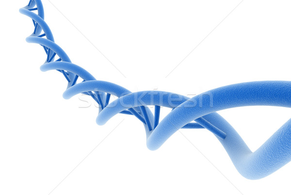 Dna isoliert weiß abstrakten Design Modell Stock foto © jezper