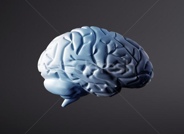 Mózgu model wysoki nauki Zdjęcia stock © jezper