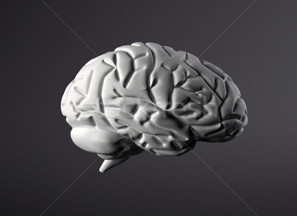 Brain Stock photo © jezper