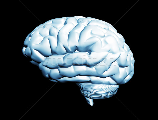 Brain isolated on black Stock photo © jezper