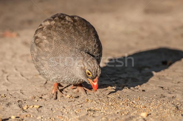 Etetés homokos föld delta kora reggel étel Stock fotó © JFJacobsz