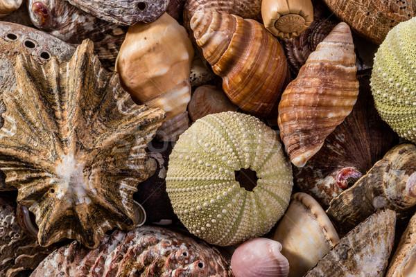 A Mix of Seashells Stock photo © JFJacobsz