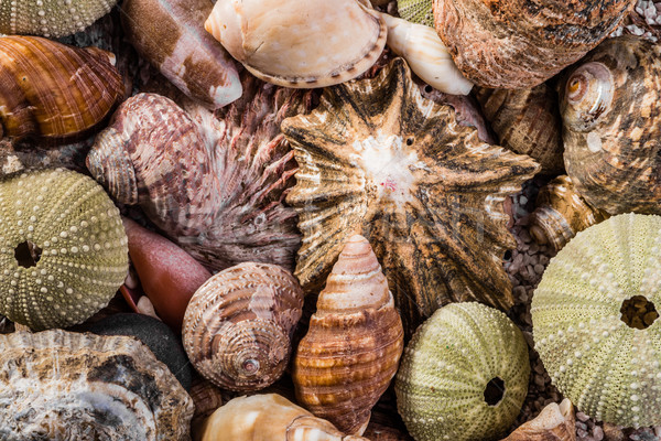 Stock photo: Mixed Sea Shells Together