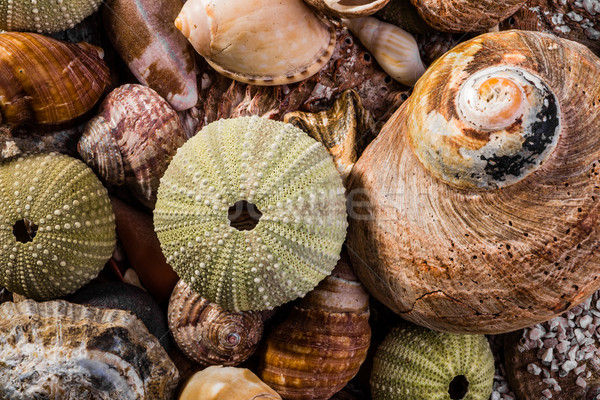 Mixed Sea Shells Stock photo © JFJacobsz