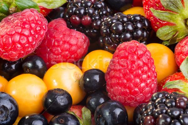 Berry hasta cerca vista frescos Foto stock © JFJacobsz