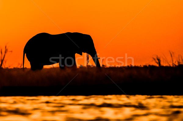 Elephant Bull Silhouette on Sidudu Island. Stock photo © JFJacobsz
