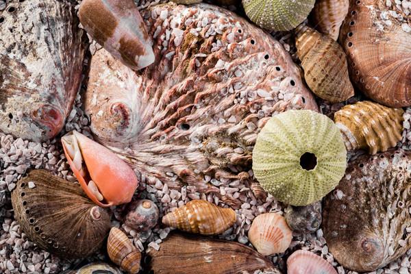 Mixed sea shells in course sea sand. Stock photo © JFJacobsz