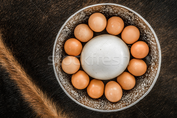 Bakers Dozen of eggs including an ostrich egg. Stock photo © JFJacobsz