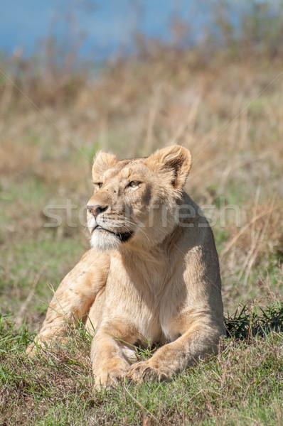 Heuvel binnenkant krater vrouwelijke leeuw Stockfoto © JFJacobsz