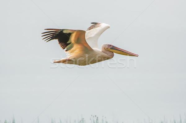 Vliegen meer natuur vogel web leven Stockfoto © JFJacobsz