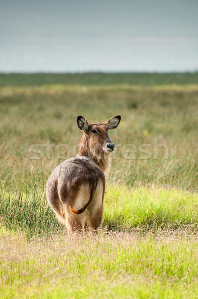 Néz mögött természet tájkép szépség háló Stock fotó © JFJacobsz
