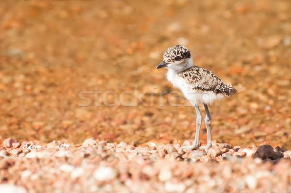 Chick lago playa detrás superficial Foto stock © JFJacobsz