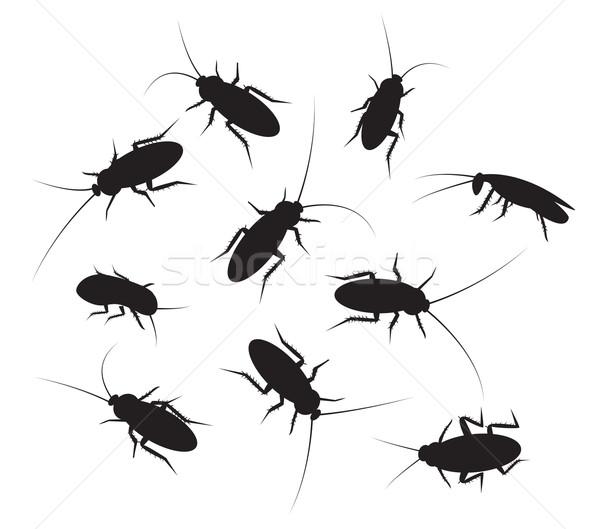 Ayarlamak siyah siluet hamamböceği detay yalıtılmış Stok fotoğraf © jiaking1