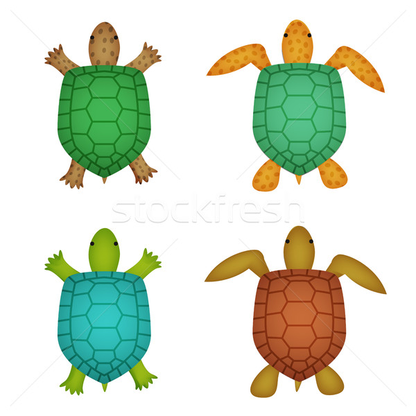 Turtle and tortoise in realistic style, top view Stock photo © jiaking1