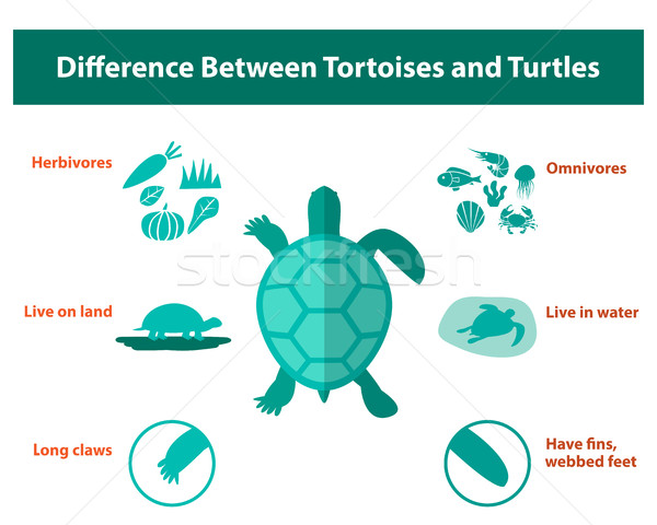 Difference between tortoises and turtles, vector Stock photo © jiaking1
