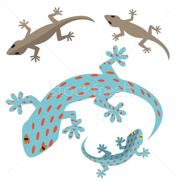 Home hagedis gekko lichaam teken cartoon Stockfoto © jiaking1