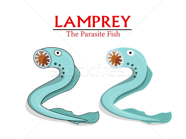 Lamprey , Parasite Fish in vector cartoon design Stock photo © jiaking1