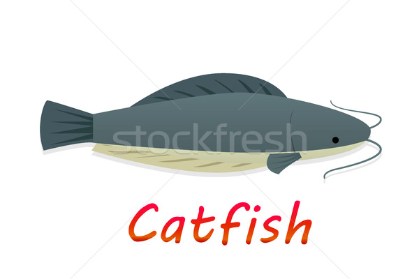 Cartoon catfish in flat style, vector Stock photo © jiaking1