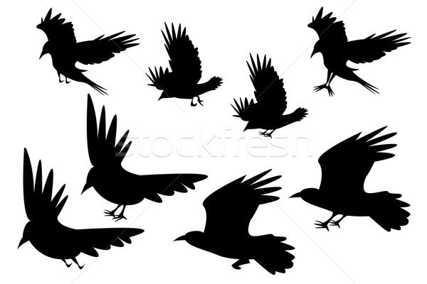 Set of silhouette flying raven bird with leg Stock photo © jiaking1