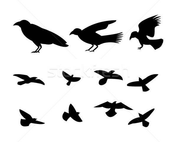 Silhouette flying raven bird, vector Stock photo © jiaking1
