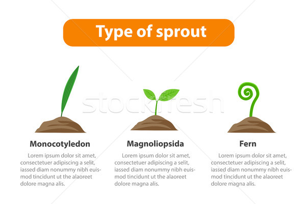 Type of sprout, Plant infographic, vector Stock photo © jiaking1