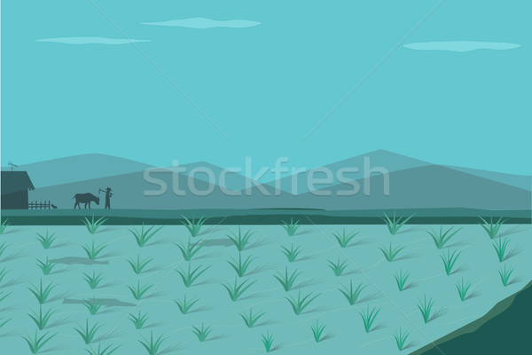Stock photo: Rice field in morning, vector