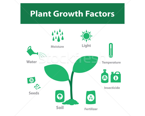 Plant growth factor infographic in monochrome Stock photo © jiaking1