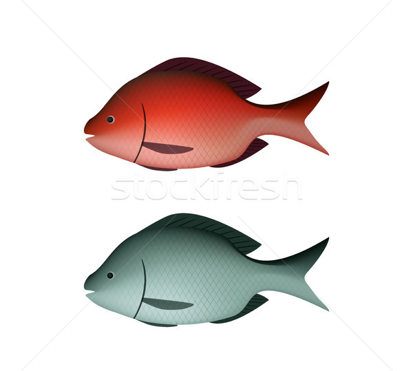 Fresh Silver and red fish in 3D vector Stock photo © jiaking1