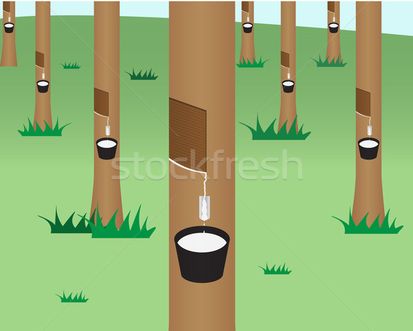 rubber tree jungle in flat style Stock photo © jiaking1