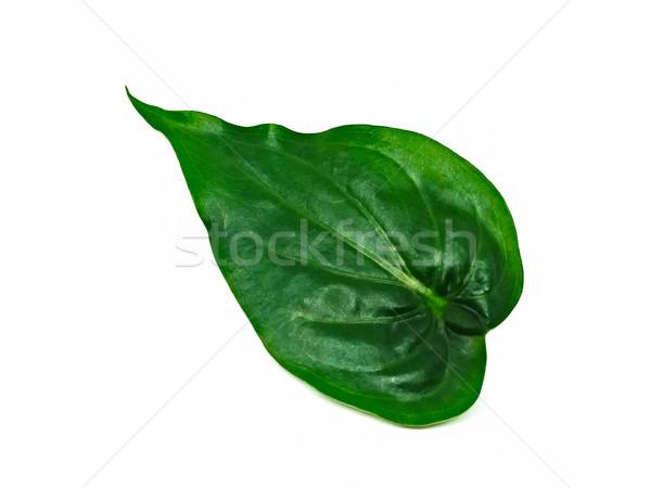 Green foliage isolated on white background Stock photo © jiaking1
