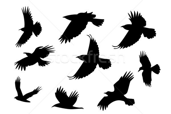Set of silhouette flying raven bird with no leg. Stock photo © jiaking1