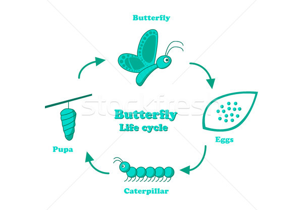 Stock photo: Butterfly life cycle in monochrome style, vector