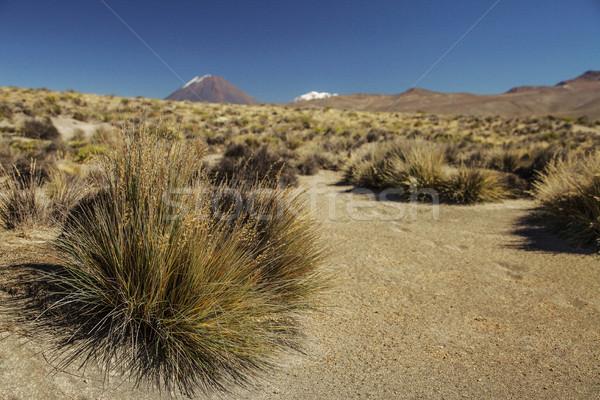 Ir de excursión activo volcán azul color planta Foto stock © jirivondrous