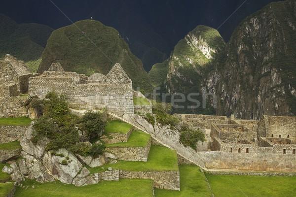Machu Picchu Peru ruines binnenkant boom gebouw Stockfoto © jirivondrous