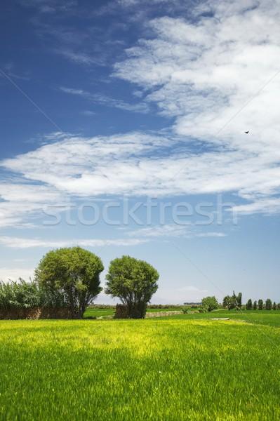 2 木 フィールド 素晴らしい 雲 ペルー ストックフォト © jirivondrous