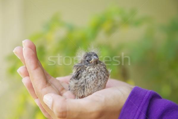 Küçük kuş kızlar el doğa Stok fotoğraf © jirivondrous