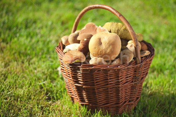 mushrooms in a basket Stock photo © jirkaejc