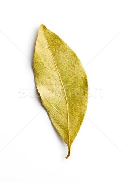 Babérlevél fehér étel természet levelek főzés Stock fotó © jirkaejc