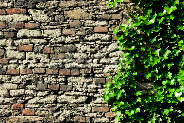 Taş duvar kapalı sarmaşık doku ağaç duvar Stok fotoğraf © jirkaejc