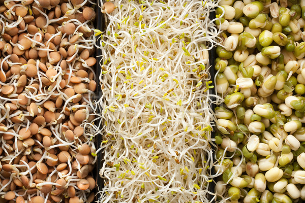 Foto stock: Alimentos · foto · tiro · primavera · naturaleza · verde