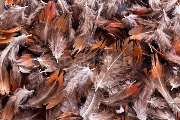 feather background Stock photo © jirkaejc